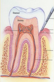 Healthy Periodontal Tissue Picture